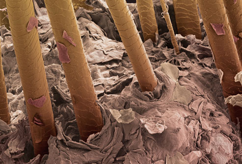 princ_rm_photo_of_sem_of_hairs.jpg